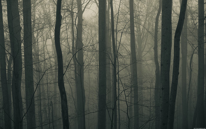fog2small.m7alS3uaDfnC.jpg