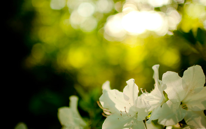 spring7_DESKTOPsmall.f5jR4Gj6xO99.jpg