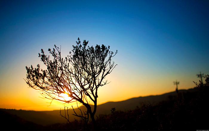 sunset_treesmall.G7S7paTMiNSy.jpg