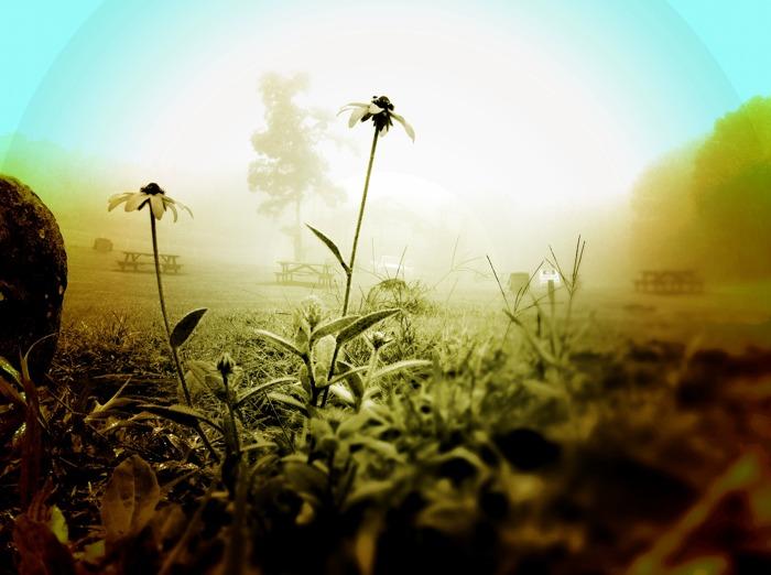 flowerfog.jpg
