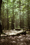 forest_shinesmaller.jpg