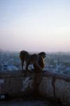 monkey_templesmaller.jpg