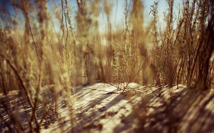 desert_grass_desktopsmaller.jpg